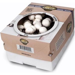 GRAINE - SEMENCE Kit culture champignons de Paris Blanc Minichamp 7