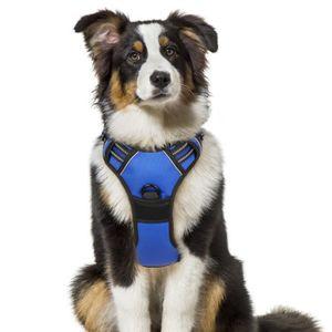 HARNAIS ANIMAL Harnais Chien - Gilet pour chien- Bleu taille S --