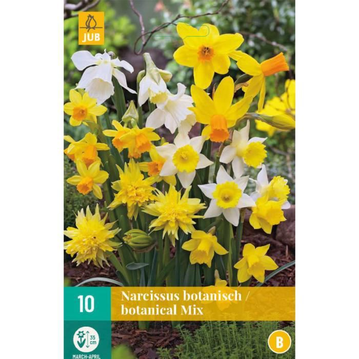 Mix de 10 Narcisses jaunes