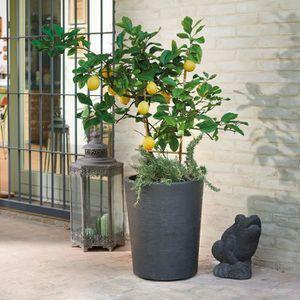 POT DE FLEUR DEROMA Pot de fleur Vaso Gravity avec réserve d'ea