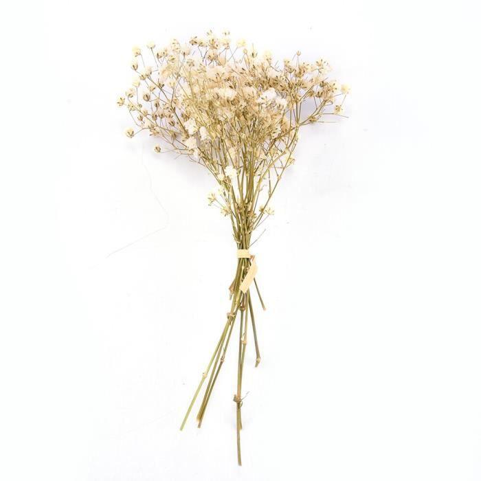 Véritable fleur heureuse petites fleurs séchées naturelles Bouquet fleurs sèches presse Mini photographie décorative Pho ES1479