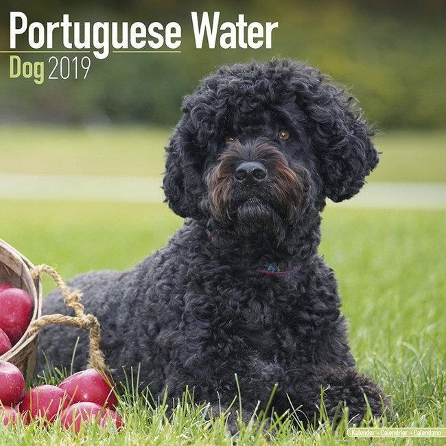 Calendrier Chien Deau Portugais 2019 Achat Vente