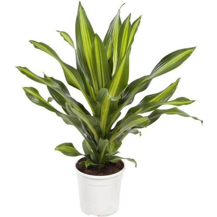 plante dépolluante facile d&# 39; entretien)