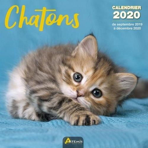 Achat Calendrier 2020.Chatons Calendrier 2020 De Septembre 2019 A Decembre 2020