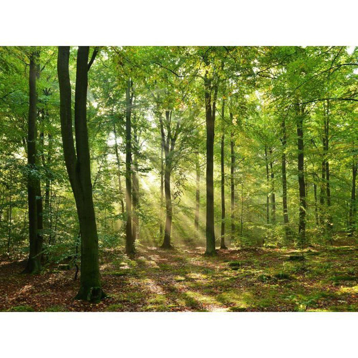 D/éco Mural Tableaux Muraux Photo Nature Automne decomonkey Papier peint intiss/é Foret 250x175 cm Trompe l oeil