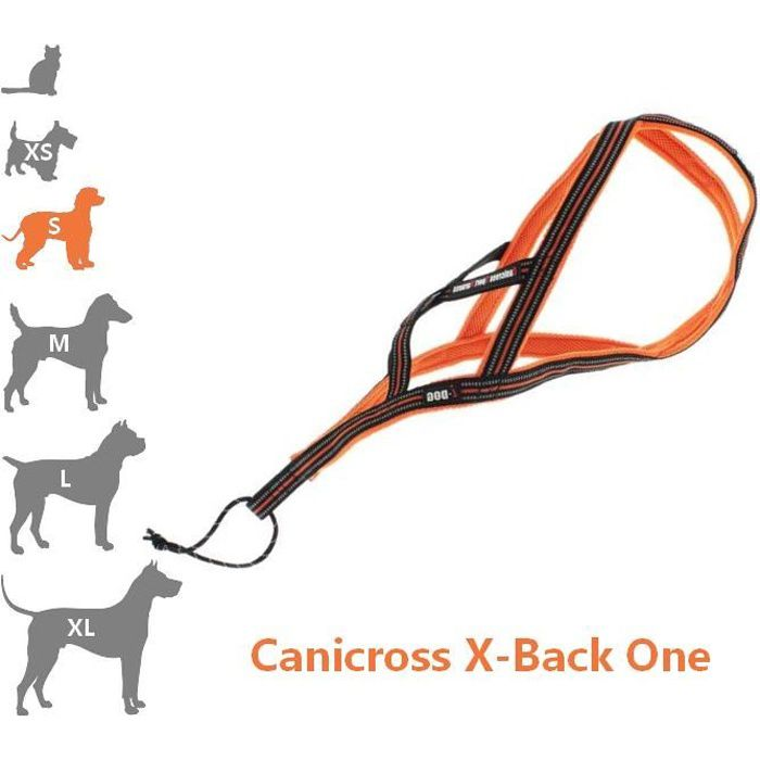 I-dog - harnais canicross petit chien