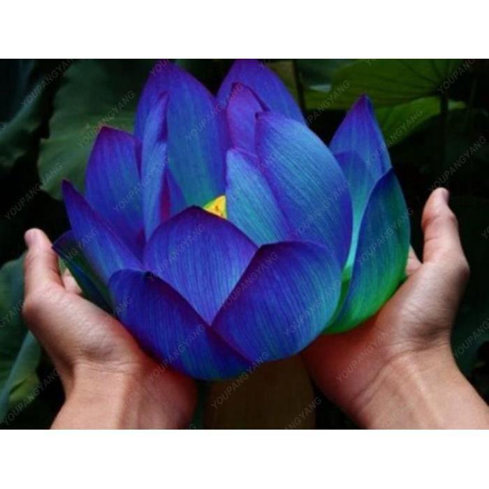 Version Rouge - 10 Pièces-Sac Lotus Bonsaï Aquatique Bonsais Bol Nénuphar Fleur Plante Vivace #86 #9