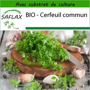 500 Graines de Cerfeuil commun /'Anthriscus cerefolium/'  Chervil seeds