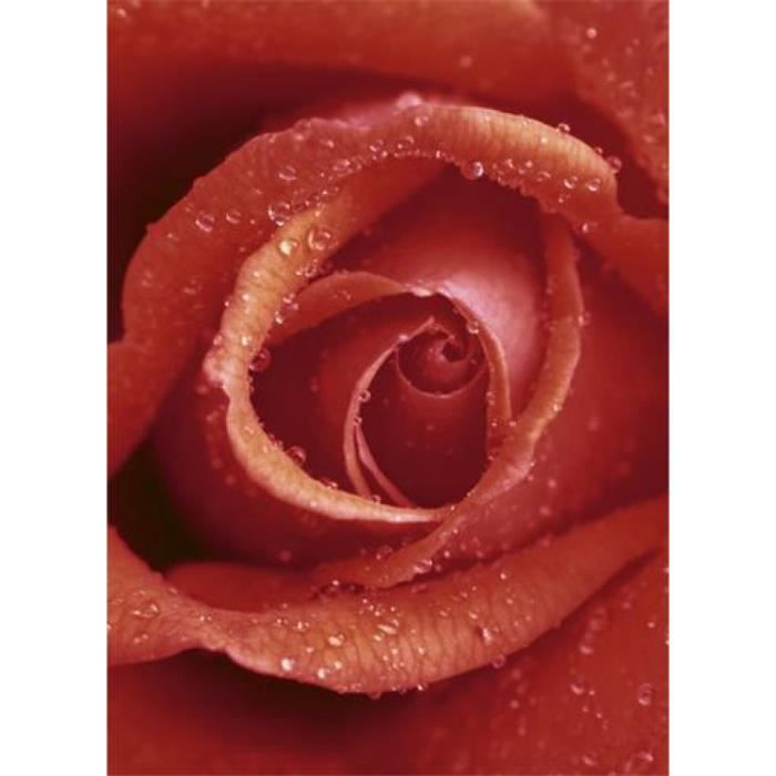 Papier peint papier peint Papier Peint Affiches Roses Rose Fleur Fleurs 13n1626p4