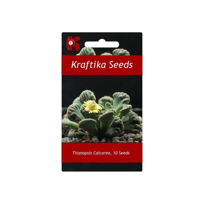 10 Graines Titanopsis Calcarea, Jardin Des Plantes Grasses, Des Mignons De Succulentes, Exotiques Rares Succulentes À Fleurs Grain