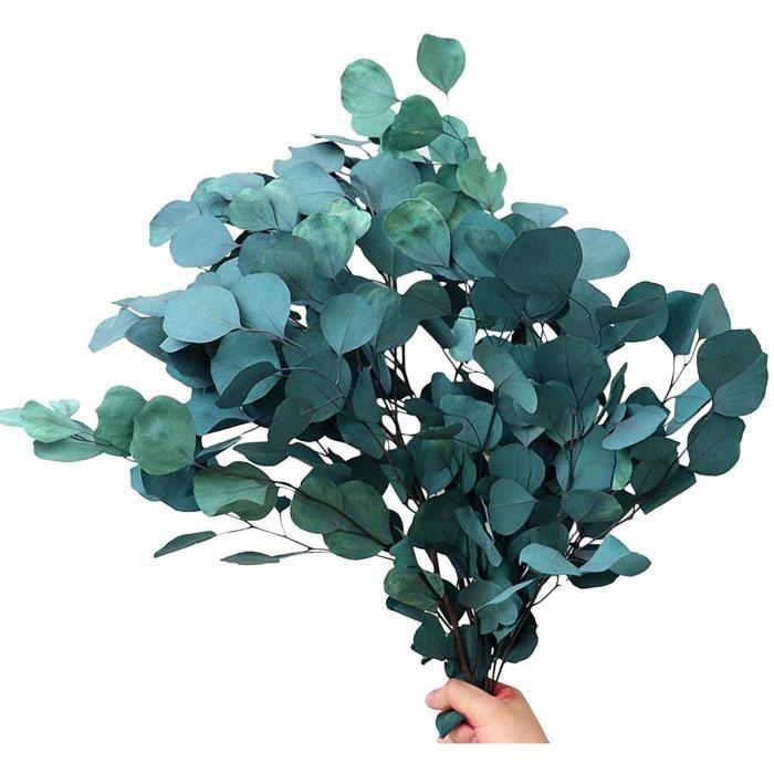 Fleur eternelle Bouquet de Feuilles d'eucalyptus Naturel, Fleur s&eacutech&eacutee &eacuteternelle pour la d&eacutecoration d302