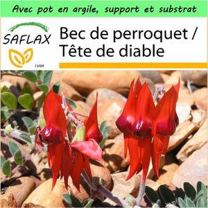 DIABLE SAFLAX - Jardin dans la boîte - Bec de perroquet -