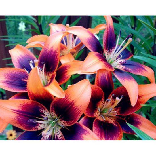 Des graines semences Mix Mélange magnifique et coloré