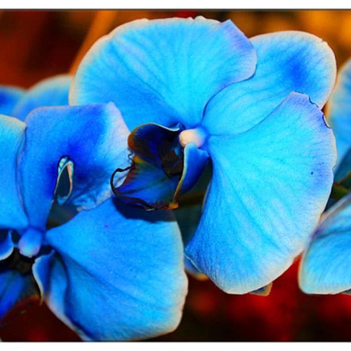 TEMPSA 200 Pcs Graines orchidée papillon bleu jardin maison fleur
