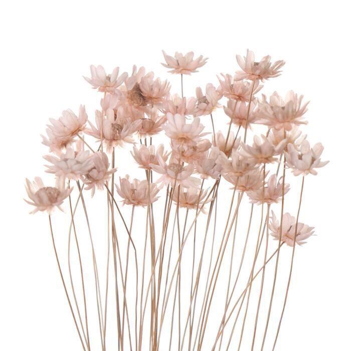Fleurs séchées décoratives Mini marguerite petites étoiles fleurs Bouquet plantes naturelles préserver - light pink-30PCS