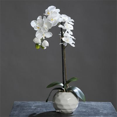 Orchidee artificielle Creme 1 hampe en pot Ceramique Blanc H 46 cm