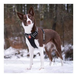 HARNAIS ANIMAL LED Harnais chien - Rechargeable USB - Réglable, r