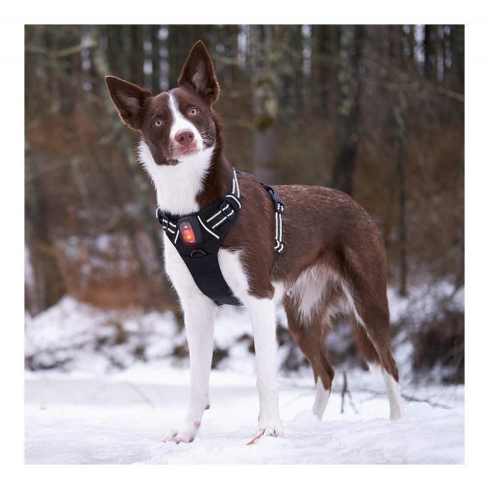 S, rouge Iseen Harnais /à LED pour chien Micro USB rechargeable sans traction avec combinaison rembourr/ée confortable pour petit moyen et grand chien