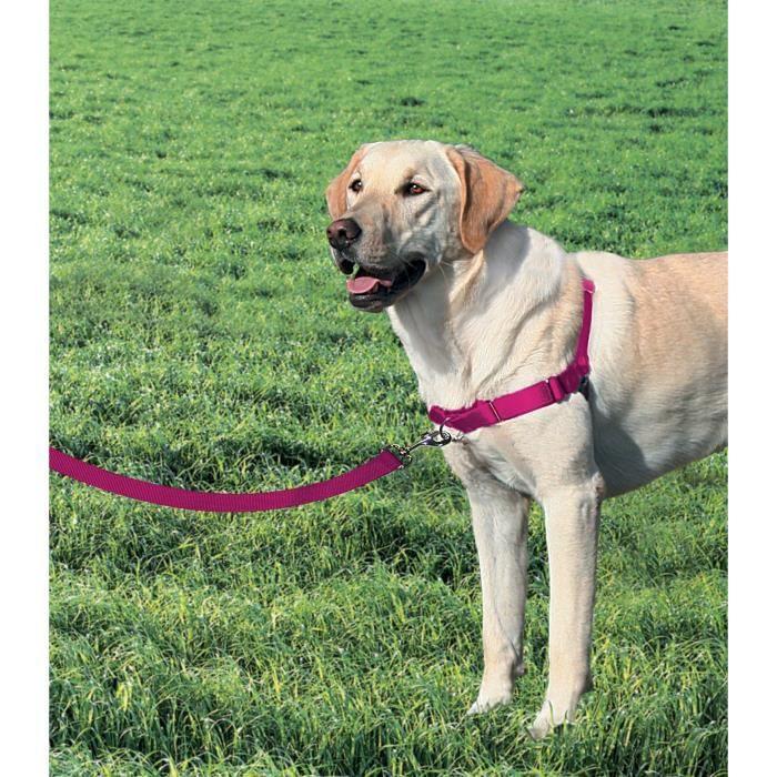 EASY WALK Harnais L - Framboise - Pour chien