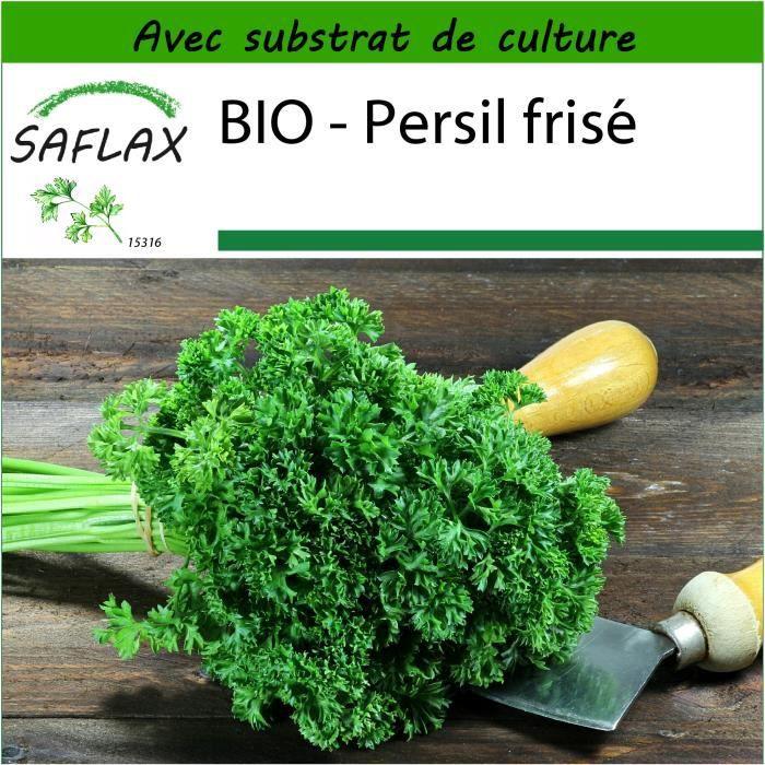 800 graines - Petroselinum crispum SAFLAX Jardin dans le sac Persil fris/é BIO Avec substrat de culture dans un sac de levage facile /à manipuler