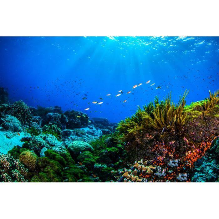 Poster Affiche Corail Mer Ocean Poisson Fonds Marin Plongee Surf Paradie 42cm x 63cm