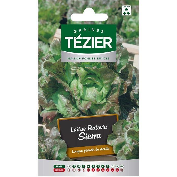 Sachet Graines - Tezier - Laitue Batavia Rouge Sierra (G.B.) - Sachet légume petit modèle - (Mois de semis de 2 à 9)