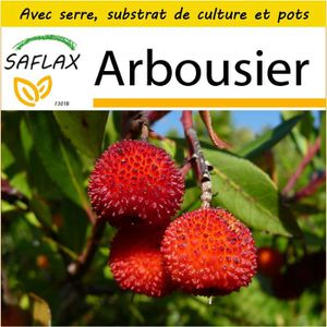 GRAINE - SEMENCE SAFLAX - Kit de culture  - Arbousier - 50 graines