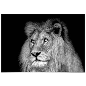Toile Lion en Afrique: Noir//Blanc Effet Impression sur toile Motif mont/ée sur cadre en bois v/éritable pas poster ou Affiche 60x40 Impression num/érique de qualit/é avec cadre