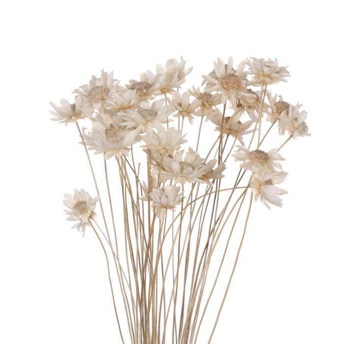 Fleurs séchées décoratives Mini marguerite petites étoiles fleurs Bouquet plantes naturelles préserver florale - white-30PCS