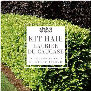 HAIE DE JARDIN Kit Haie Laurier Du Caucase (Prunus Laurocerasus C