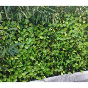 CLÔTURE - GRILLAGE Brise-vue treillis en feuilles de rosier coloris v