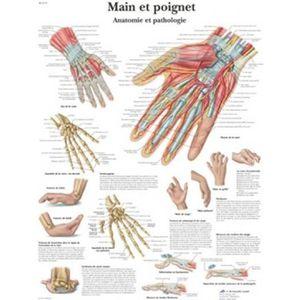 ANATOMIE HOMME Planche anatomique Main et poignet VR2171UU 50X67C