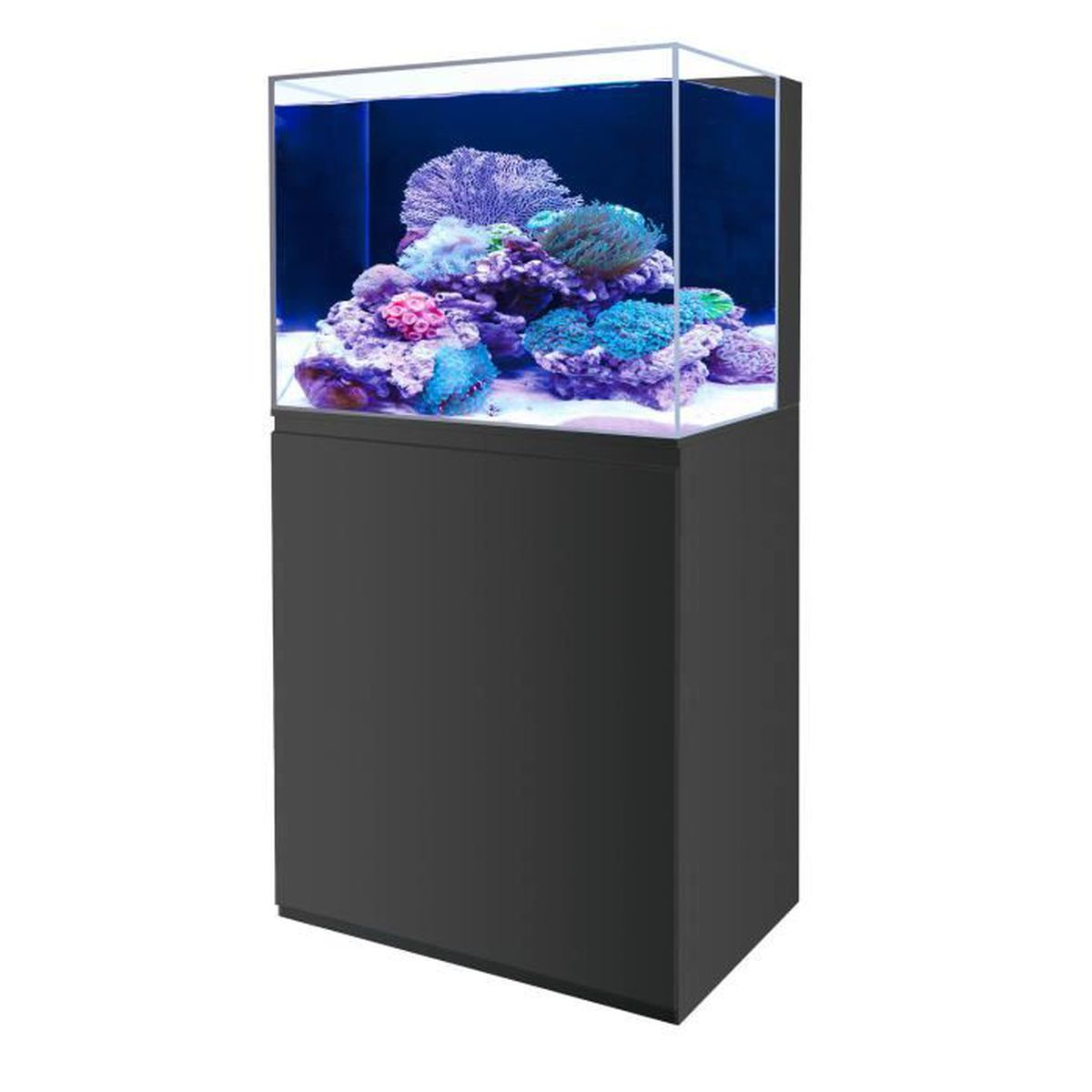 Aquarium pas cher fashion designs for Aquarium eau douce pas cher