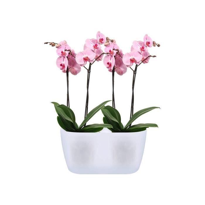 Elho Brussels Orchidée Duo 25 - Pot De Fleurs - Transparent - Intérieur - Ø 25 x H 12.6 cm