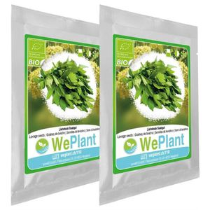 GRAINES BIO Livèche - Graines de plantes aromatiques-Intér