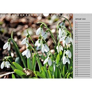 TABLEAU - TOILE CD-44357 Arbres en fleurs 2020 A4 paysage