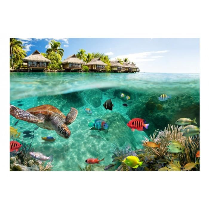 taille 350x245 Chic Papier peint paysage, mer, poissons, nature, animaux, tortues
