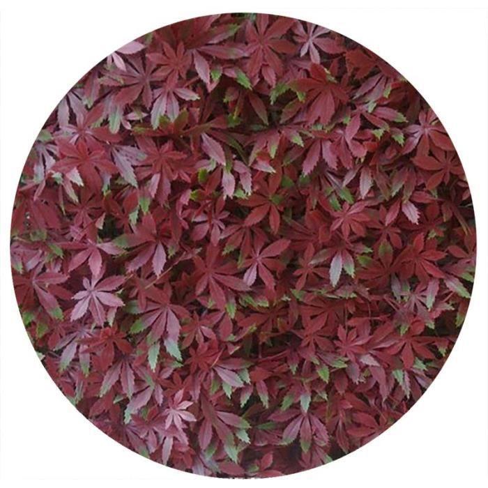 vigne vierge rouge artificielle - 3 m2 soit 12 …