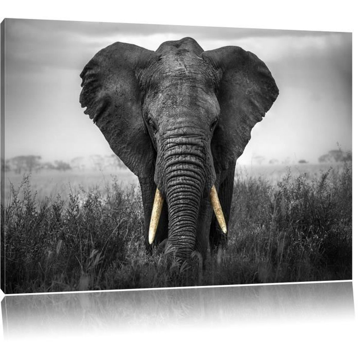toile imprim magnifique noir blanc elephant compl tement encadr es avec civi re wall art. Black Bedroom Furniture Sets. Home Design Ideas