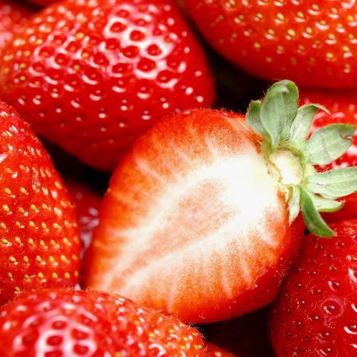 300 pcs/sac graines de fraises géant graines de fruits bio--Rose Vie