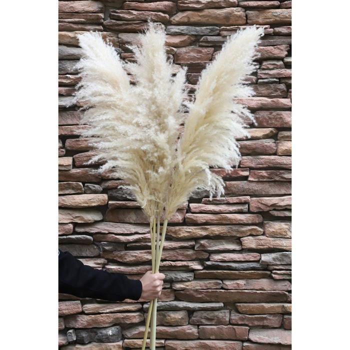 Fleurs séchées NaturalNH Herbe de la pampa s&eacutech&eacutee, grande taille, à peine 100 cm de long, herbe de la pampa109