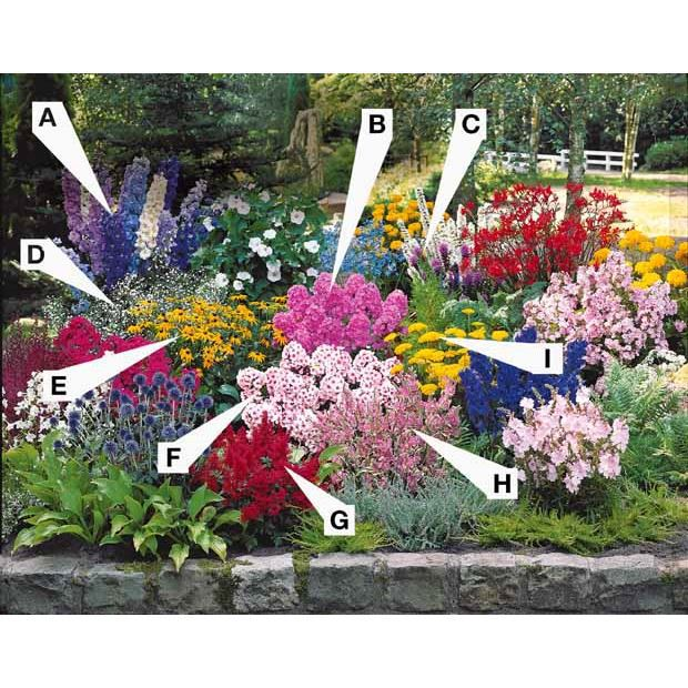 Collection 50 plantes vivaces assorties achat vente for Savoir composer un beau jardin