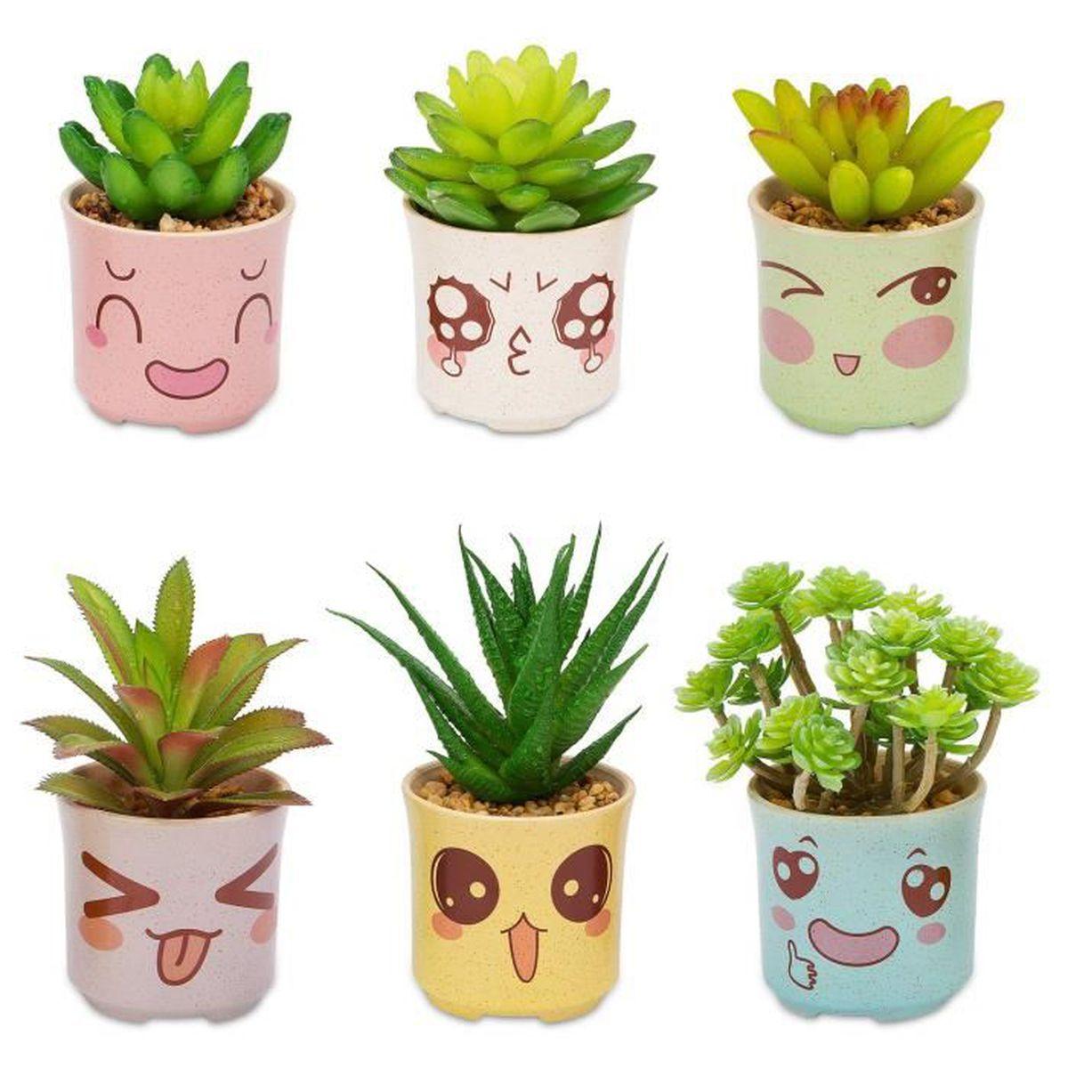 Plante Haute En Pot 6pcs plantes succulentes naturelles mini, plante succulente