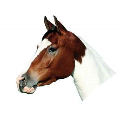 Sticker d co murale animaux t te de cheval achat for Decoration murale tete animaux