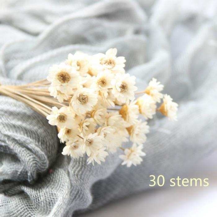 Mini marguerite de fleurs séchées décoratives 30 pièces, Bouquet de fleurs étoiles à fleurs naturelles, préservation - WHITE