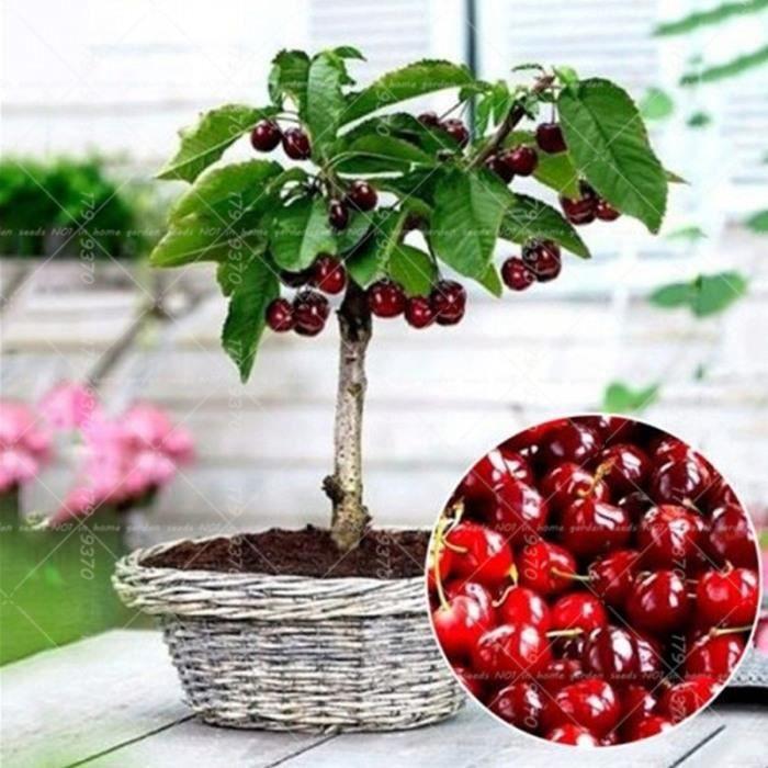 Version 10pcs - 100 Pièces 4 Genre Bonsaï Arbres Fruitiers Plantes, Vivace Nain Kiwi Pomme Orange Cerise Fruits Jardin En Pot