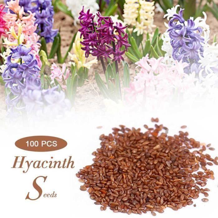 100pcs-lot mélangé couleur jacinthes graines Maison Jardin plante fleur décoration