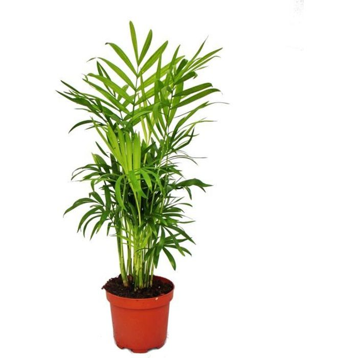 Plante Artificielle en pot-Taro 105cm