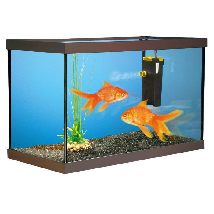 Aquarium kit poissons rouges 40x20x15cm achat vente for Image aquarium poisson rouge