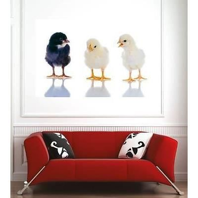 Affiche poster d coration murale poussins r f 3624885 6 for Poster decoration murale